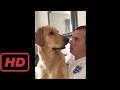 Pet's World |  Funniest Golden Retriever Videos 2017 #7