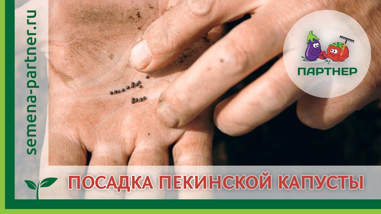 Новые peugeot partner пасс. 2014-2018 в любом городе украины представлены на auto. Ria. Вы можете купить новое авто пежо partner пасс.