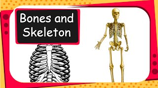 Science - Human Body Bones and Muscles - Part 1 - English