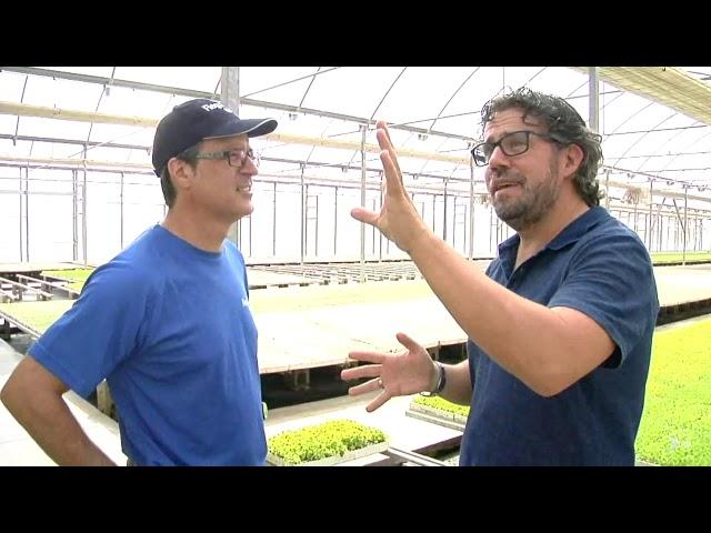 Invernaderos · Microaspersor SpinNET® y filtro Sigma® en un semillero hortícola de Babyplant