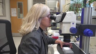Stopping deadly virus is Illinois scientist's goal