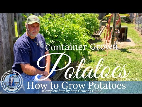How To Grow Potatoes (Complete Step By Step Growing Guide) Part 3 of 3