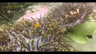 видео Андаманское море