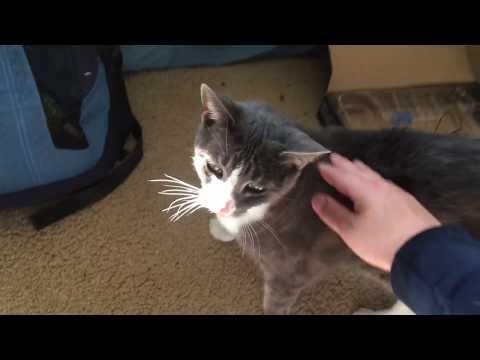 My Grey Tabby Cat, Gracie
