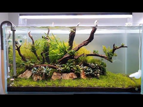 Evolution Aqua Aquascaper 900 - Aquascape is now 3 weeks ...