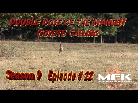 Double Dose of the Mange Coyote Killing  S9:E22