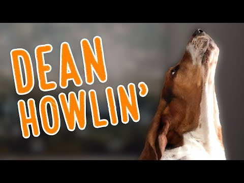 Dean HOWLIN'! 2020 Howling Compilation