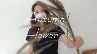 이대신촌 꽃집 일상과 가을꽃 소개해요 브이로그 9번째이…