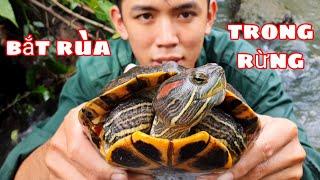 Bắt Được Con Rùa Trong Rừng  | Cách Bắt Rùa Bằng Tay Không