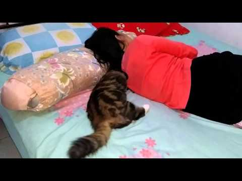 Kucing jantan belang 3 berlafal ALLAH