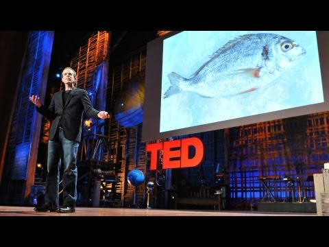 Video image: How I fell in love with a fish - Dan Barber