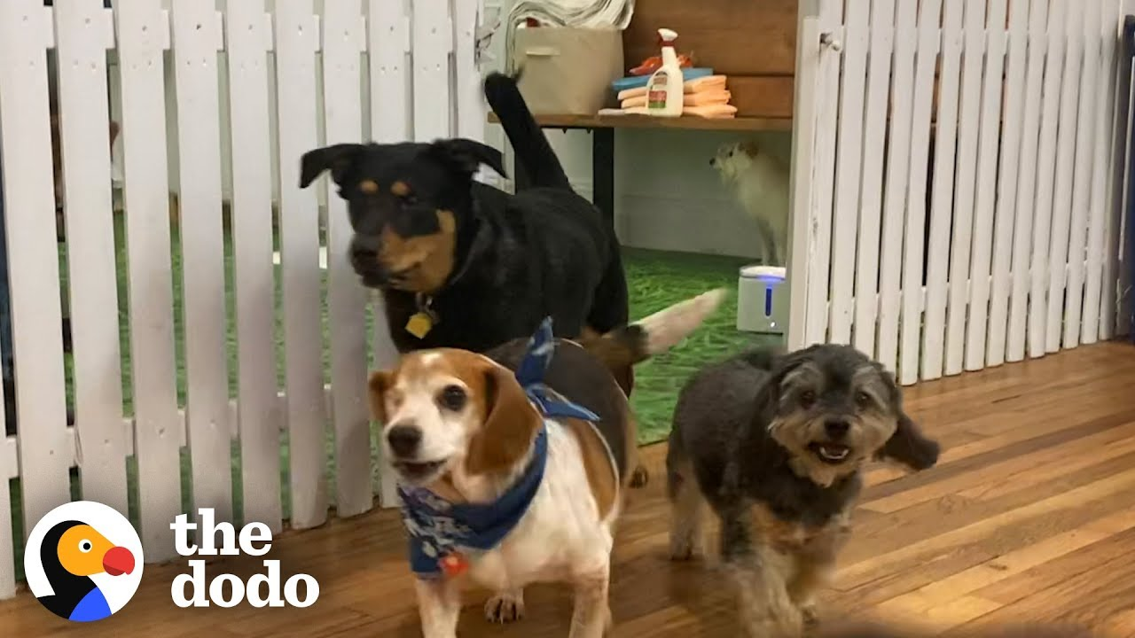 Welcome To The Dodo Rescue Dog Show | The Dodo