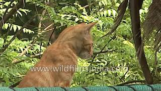 Cat climbs down from her perch on top of a car shed