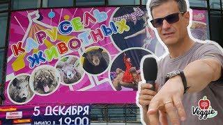 Цирк с животными, репортаж из Перми