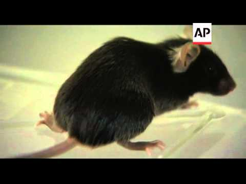 Scientists discover mice that sing