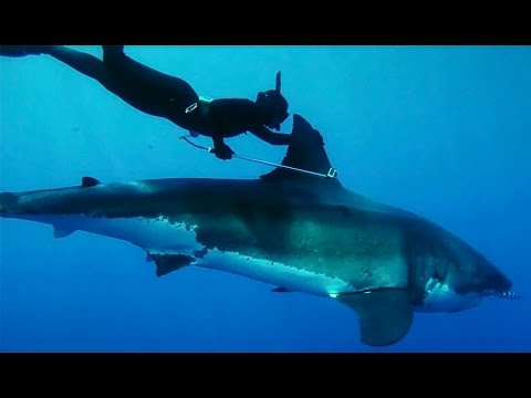 Meet Kimi Werner: The Woman Who Rode a Great White Shark - The Inertia