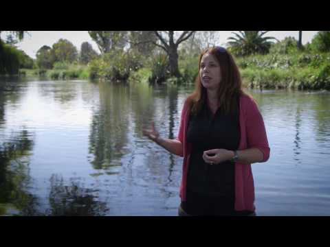 Aquatic Ecology - Shelley McMurtrie