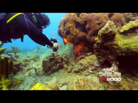 Подводный фотоаппарат и подводная камера. Sealife DC2000 - это два в одном