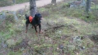 Njassa 6 Months 3 Weeks Old Forest Training