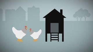 La semaine verte | Capsule chiffrée #101 - Les poules en ville