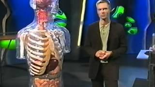 Reizdarmsyndrom und Bauchhirn.mpg