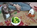 Baby Monkey | Doo And Cat Miu Stay At Home With Mom