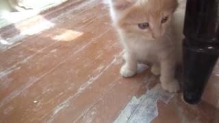 Котята рыжие в добрые руки
