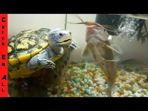 TURTLE vs FISH! World Record in AQUARIUM COLLECTION! thumbnail