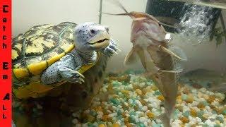 TURTLE vs FISH! World Record in AQUARIUM COLLECTION!