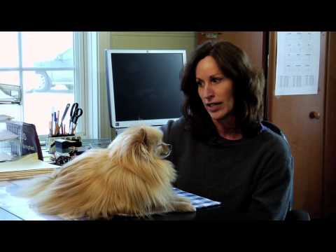 Short Documentary | Pampered Pets Dog | Pets Dog Lover -2016