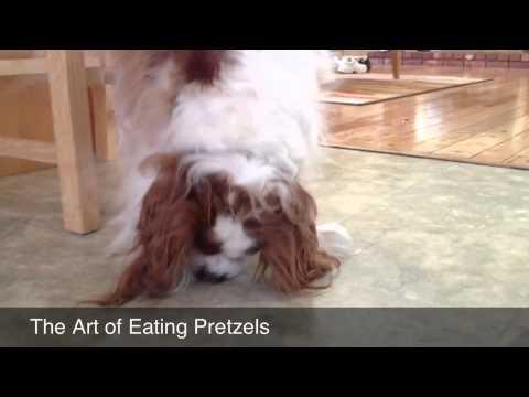 The Art of Eating Pretzels