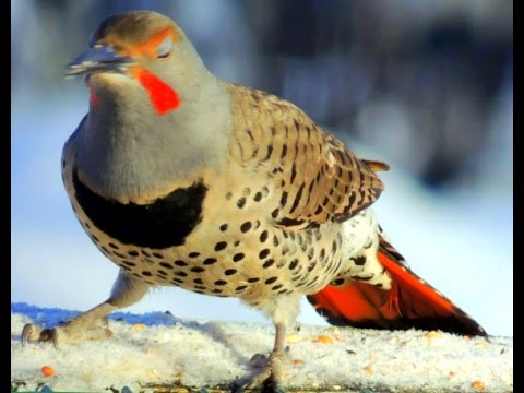 Birdwatching: A classical melody with wintering birds