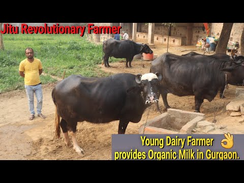 👍#Young Dairy Farmer - of #Gurugram providing PURE & Organic Milk to families (Manesar). 👍