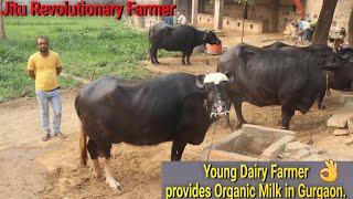 👍#Young Dairy Farmer of #Gurugram providing PURE & Organic Milk to families (Manesar). 👍