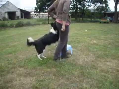 Dog dancing - trénujeme pivot