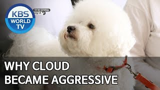Why Cloud became aggressive [Dogs are incredible/ENG/2020.04.14]