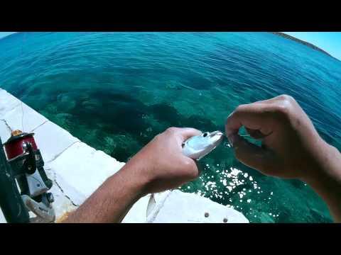 Pecanje ušate - otok Premuda 2015