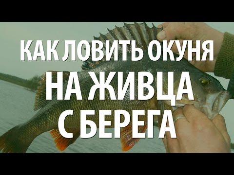 СПИННИНГОВАЯ РЫБАЛКА в ИТАЛИИ с БЕРЕГА на РЫБУ БАССиз YouTube · С высокой четкостью · Длительность: 27 мин25 с  · Просмотры: более 1.000 · отправлено: 24.04.2017 · кем отправлено: Romanov Kirill