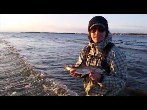 """Vilse på Gotland 2016"", en film om Havsöringsfiske"