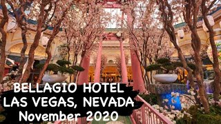LAS VEGAS BELLAGIO CONSERVATORY AND BOTANICAL GARDEN | NOV. 2020 | LAS VEGAS STRIP