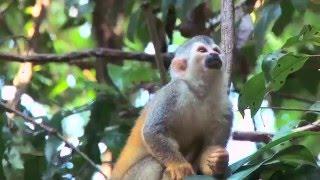 Costa Rica: Wildlife at the Beach