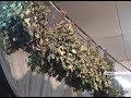 Завершается сезон заготовки березовых веников