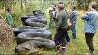 DOCUMENTAIRE-REPORTAGE: L'anaconda, le monstre d'amazonie