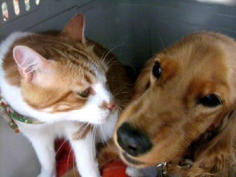 犬「出たいよ」猫「駄目!バシッ」一緒にキャリーの中で The dog is submissive to the cat