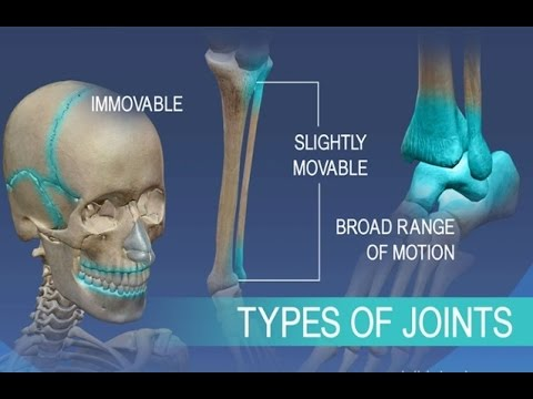 Anatomy and Physiology of Articulations Joints