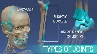vuclip Anatomy and Physiology of Articulations Joints