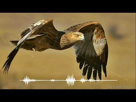 🎼Eagle Sound | Eagle Sound Effect _ By The Mobile Ringtone