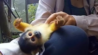 disarmingly sweet squirrel monkey