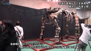 恐竜の現物化石 全身骨格の組み立て作業 国立科学博物館で「大恐竜展」/神奈川新聞(カナロコ)
