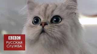 Что значит быть кошкой - BBC Russian
